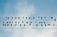 By Word or By Bird: Acquisitions through Twitter