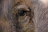 Announcing Elephant Speak: A Devoted Keeper's Life Among the Herd